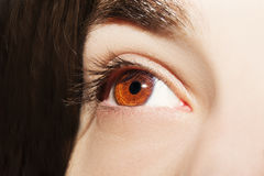 Bild eines menschlichen Auges des schönen verständnisvollen Blickes Stockfotografie