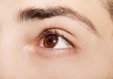 Bild eines menschlichen Auges des schönen verständnisvollen Blickes Stockbild