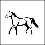 Bild eines Pferds Stockbild