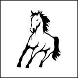 Bild eines Pferds Stockfotos