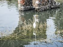 Bild eines Reihers in einem Fluss mit trockenen Bürsten- und Ziegelsteinsäulen im Hintergrund stockfoto