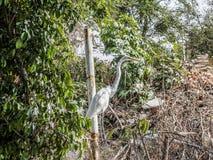 Bild eines Reihers unter grünem und trockenem Unterholz nahe bei einem Metallpfosten lizenzfreies stockfoto