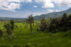 Bild eines Reisfelds bei Amed lizenzfreie stockbilder