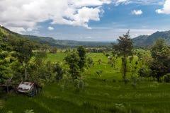 Bild eines Reisfelds bei Amed stockfotos