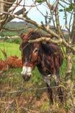 Bild eines schönen Esels hinter dem Zaun stockfoto