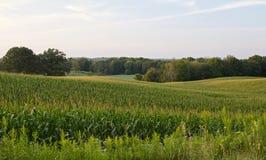 Bild eines schönen Maisfeldes im Ackerland Stockfotos