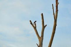 Bild eines Vogels am Ende des toten Baums Stockbilder