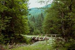 Bild eines wilden Waldes mit einer Brücke lizenzfreies stockfoto