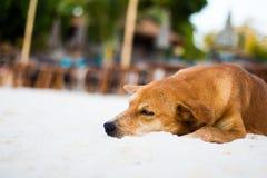 Bild für Ihr Konzept, Hund schlafen bequem Auf weißem Sand ist der Strand durch das Meer eine Touristenattraktion in Thailand lizenzfreies stockfoto