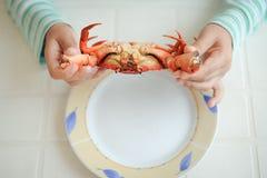 Bild för bästa sikt av händer och den röda lagade mat krabban på plattan exotisk semester arkivfoton