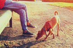 Bild för låg vinkel av personen med hans hund Utvalt fokusera Arkivbilder