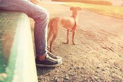 Bild för låg vinkel av personen med hans hund Utvalt fokusera Royaltyfria Foton