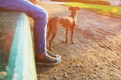Bild för låg vinkel av personen med hans hund Utvalt fokusera Royaltyfri Foto