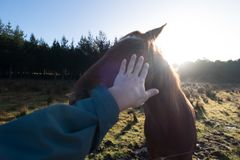 Bild för lantgårddjur av en hand som daltar en häst royaltyfri bild