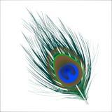 Bild för påfågelfjädervektor med vit bakgrund royaltyfri illustrationer
