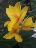 bild med blomman och daliya arkivbild