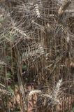 Bild med textur av det naturliga ursprunget i som en närbild av några sädes- växter royaltyfri fotografi
