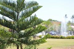 Bild mit grünem Baum Lizenzfreies Stockbild