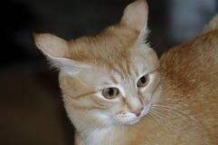 Bild mit schöner roter Katze lizenzfreie stockbilder