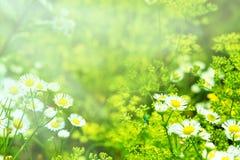 Bild mit wilden Blumen und Käfer Stockfoto