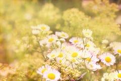 Bild mit wilden Blumen und Käfer Stockbilder