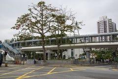 Bild nahe bei einer Straße, regnend geht, mit großem Baum und Brücke an stockbild
