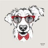 Bild-Porträtbulldogge in der Krawatte und mit Gläsern Auch im corel abgehobenen Betrag Lizenzfreies Stockfoto