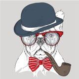 Bild-Porträtbulldogge im Hut, in der Krawatte und in den Gläsern mit Tabakpfeife Auch im corel abgehobenen Betrag Stockbilder