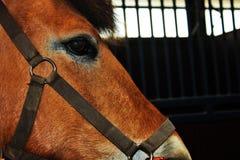 bild som visar delen av en härlig horse& x27; s-framsida arkivbilder