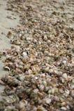 Bild voll von bunten Seeoberteilen Stockbilder