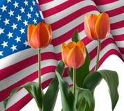 Bild von Amerika-Flagge und -tulpe blüht Nahaufnahme Stockbilder