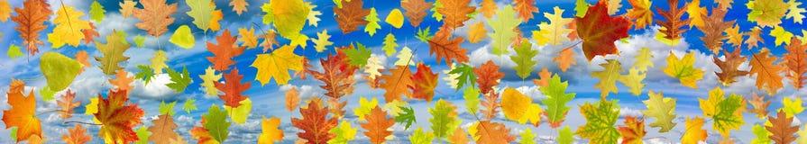 Bild von Blättern gegen den Himmel Lizenzfreie Stockfotografie