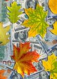 Bild von Dollar und von Herbstlaub Lizenzfreie Stockfotos