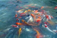 Bild von Fischen nannte Cyprinus Carpio thailand Stockfotografie