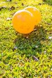 Bild von Herzen auf den Ballonen auf Rasen Lizenzfreie Stockfotos