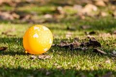 Bild von Herzen auf den Ballonen auf Rasen Stockfotografie