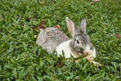 Bild von Kaninchen bleiben auf der grünen Rasenfläche Lizenzfreies Stockbild