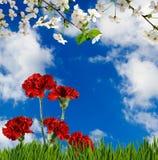 Bild von schönen Blumen in der Gartennahaufnahme Stockbild