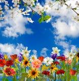 Bild von schönen Blumen in der Gartennahaufnahme Stockbilder