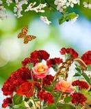Bild von schönen Blumen in der Gartennahaufnahme Lizenzfreies Stockfoto