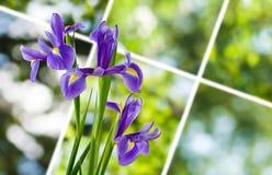 Bild von schönen Blumen in der Gartennahaufnahme Stockfotografie