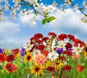 Bild von schönen Blumen in der Gartennahaufnahme Lizenzfreie Stockfotos