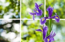 Bild von schönen Blumen in der Gartennahaufnahme Lizenzfreies Stockbild