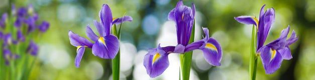 Bild von schönen Blumen in der Gartennahaufnahme Stockfotos