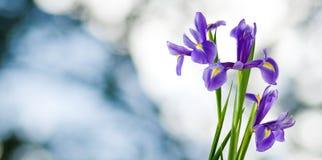 Bild von schönen Blumen in der Gartennahaufnahme Lizenzfreie Stockfotografie