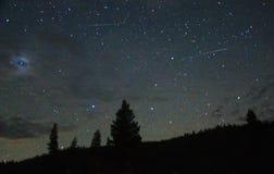 Bild von Sternen und von Bäumen in der Wildnis lizenzfreie stockfotografie