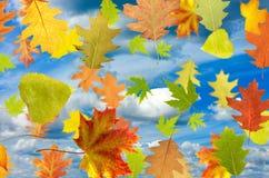 Bild von verschiedenen Blättern Stockbilder