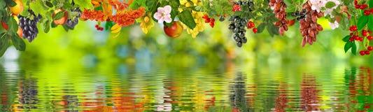 Bild von verschiedenen Früchten über der Wassernahaufnahme Lizenzfreie Stockfotografie