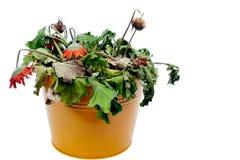 Bild von verwelkten Blumen Stockfotos