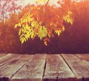 Bild von vorderen rustikalen hölzernen Brettern und von Hintergrund des Falles verlässt im Wald Lizenzfreies Stockbild
